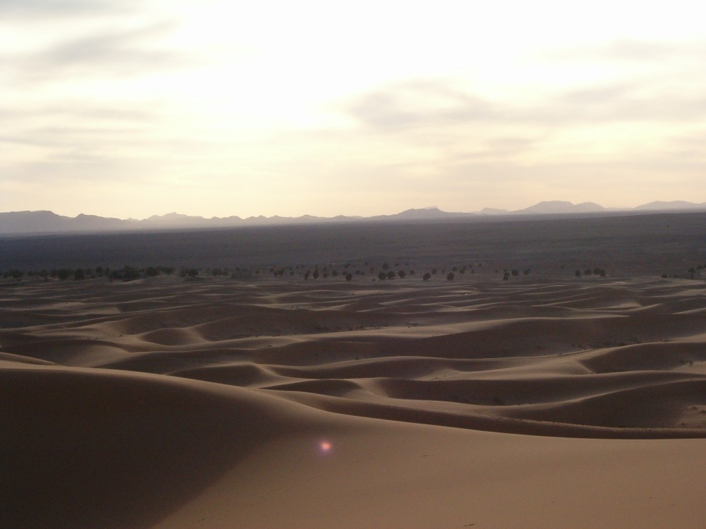 Un Point rose dans le désert
